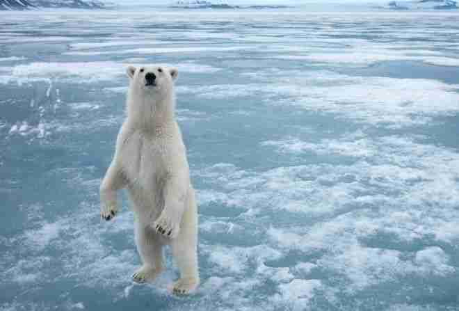 Αρκτική – Ανταρκτική.