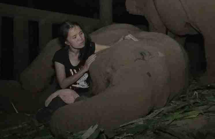 Αυτός ο ελέφαντας κοιμάται μόνο όταν η γυναίκα που τον φροντίζει κάνει αυτό..