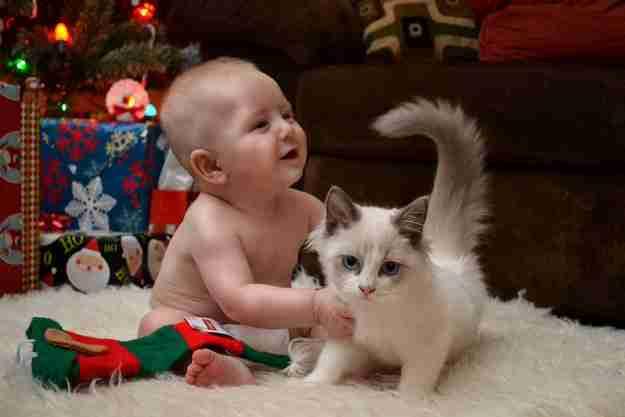 Αυτό το γατάκι που ο αδελφός της της χάρισε τα πιο αξέχαστα Χριστούγεννα.