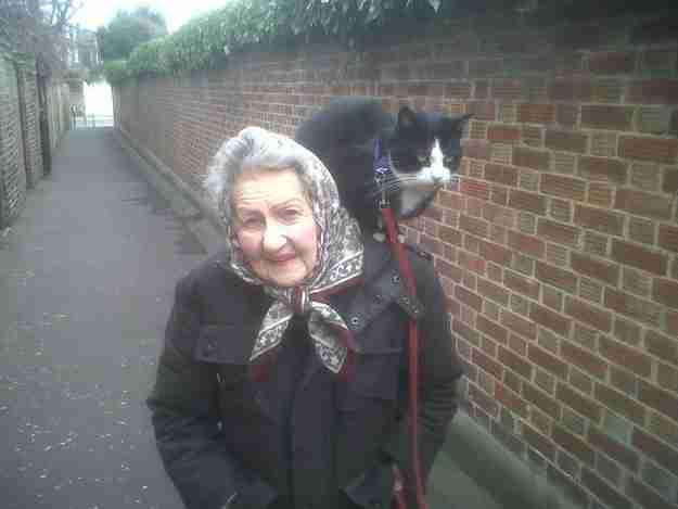 Αυτή η γάτα που ακολουθεί την ιδιοκτήτρια της παντού.