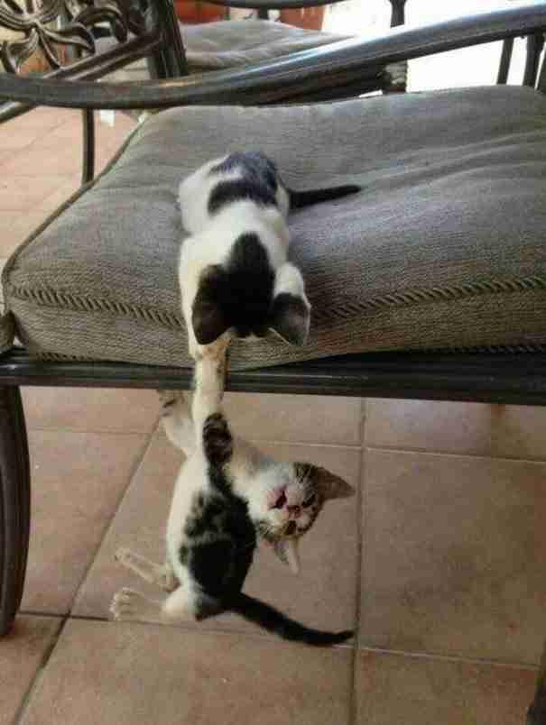 Αυτά τα γατάκια που μάλλον έχουν δει το Lion King!