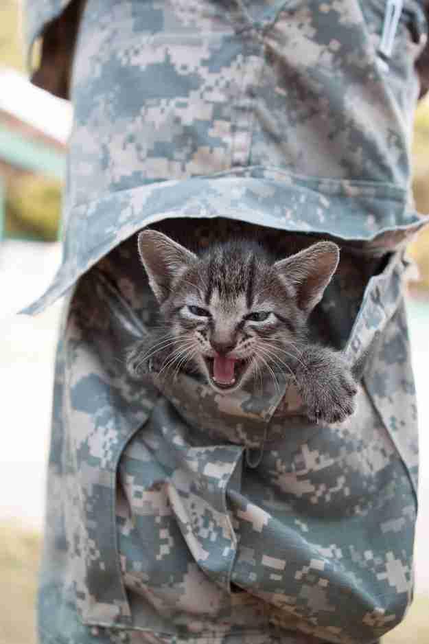 Αυτό το γατάκι που βρήκε ένα νέο σπίτι στην τσέπη ενός στρατιώτη.