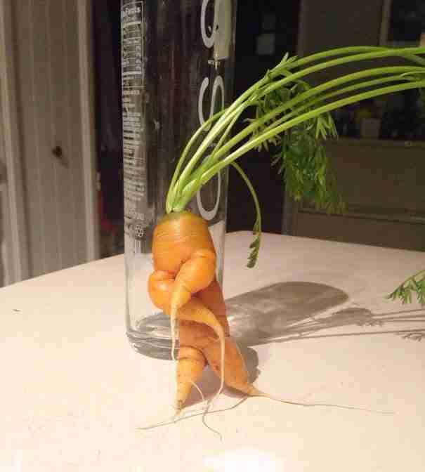 Καρότο που χορεύει!