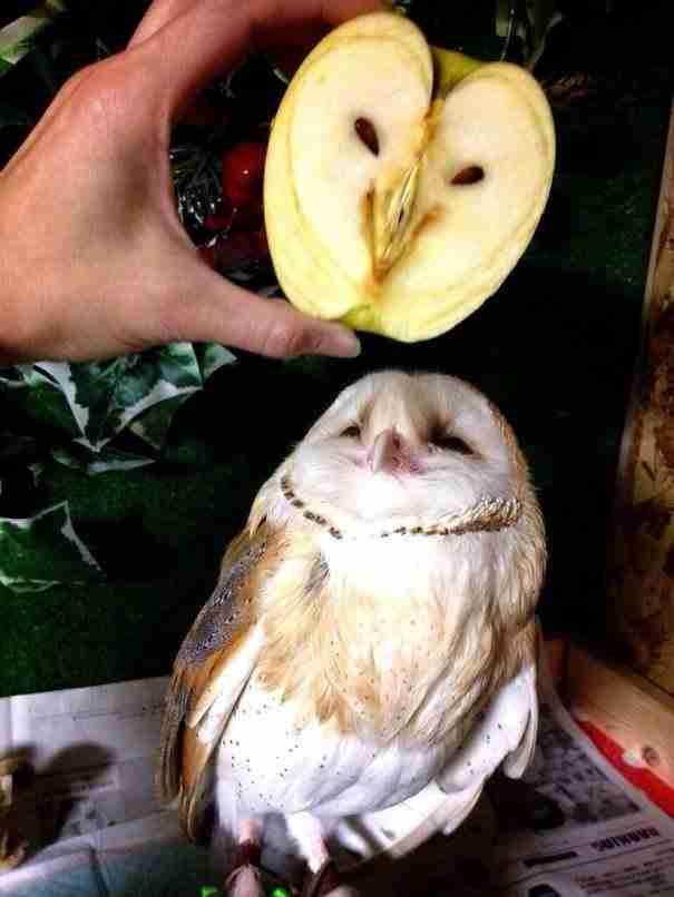 Ένα μήλο που μοιάζει με Κουκουβάγια