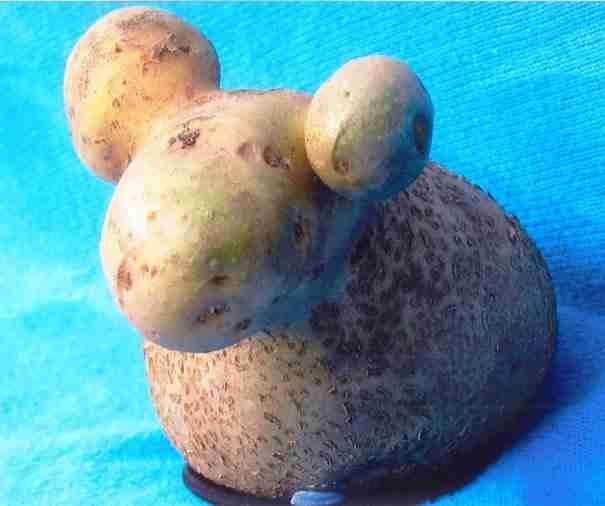 Η πατάτα που θυμίζει πρόβατο