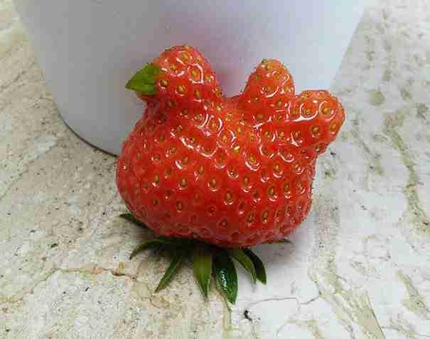 Μια φράουλα που μοιάζει με ένα κοτόπουλο