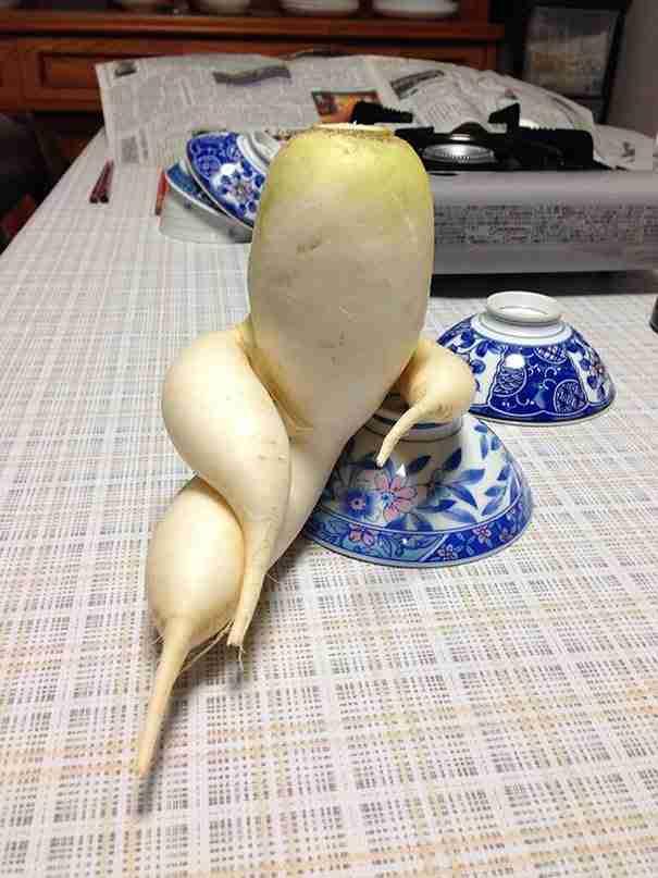 Ένα ραπανάκι που φωτογραφίζεται με νάζι..
