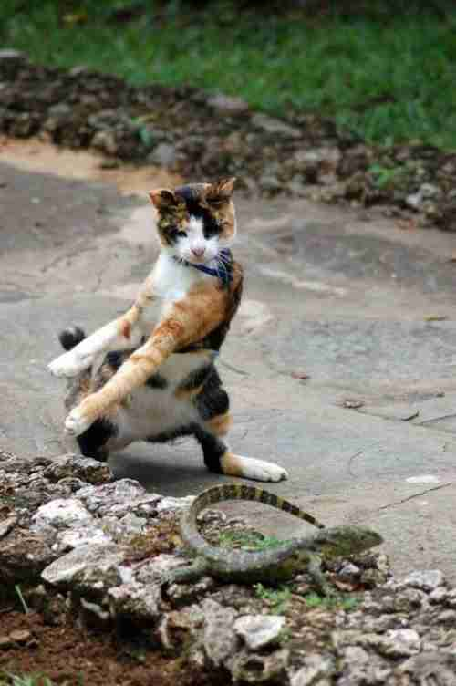 Οι 40 πιο αστείες φωτογραφίες με γάτες που υπήρξαν ποτέ.