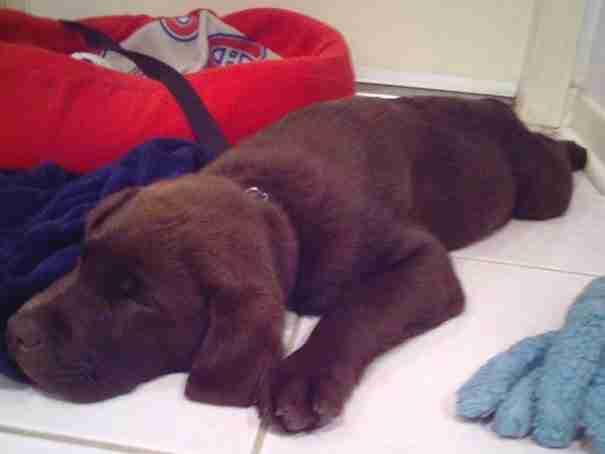 Αυτοί οι χαριτωμένοι σκύλοι είναι πραγματικά «εξαντλημένοι». Απολαύστε τους..