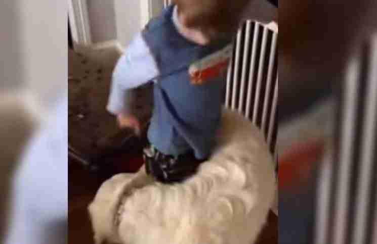 Μόλις αυτός ο σκύλος βλέπει τον μικρό ιδιοκτήτη του κάνει το πιο παράξενο πράγμα!