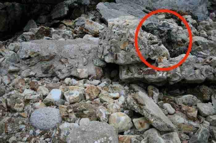 Θα εντοπίσετε τους στρατιώτες που κρύβονται σε αυτές τις εικόνες; Αν μπορείτε τότε ανήκετε στο 2%.