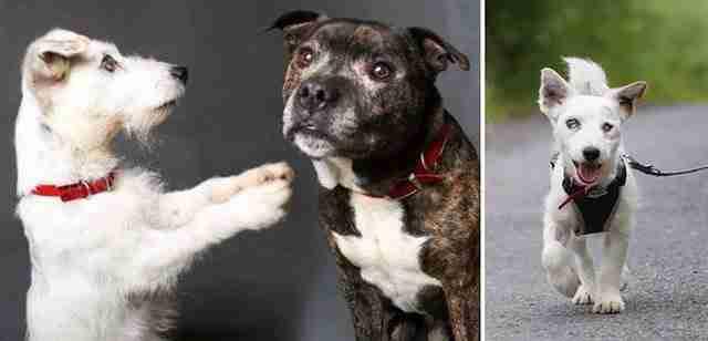 Ένας τυφλός σκύλος και ο καλύτερος του φίλος, ο οδηγός του, αναζητούν ιδιοκτήτη..