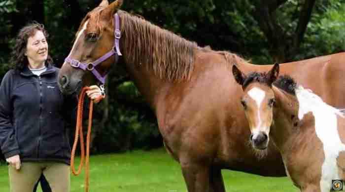 Συγκλονίστηκε όταν έμαθε ότι το άλογο που αγόρασε ήταν έγκυος. Αλλά το πραγματικό σοκ ήρθε μετά τη γέννηση.