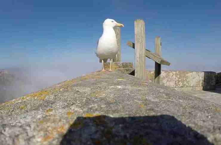 Ένας γλάρος έκλεψε μια κάμερα! Πρέπει να δείτε το συναρπαστικό βίντεο που κατέγραψε!