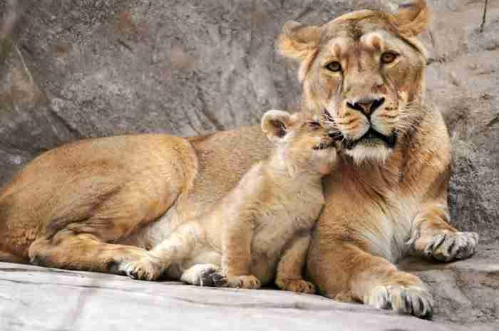 Οι 30 πιο χαριτωμένες μαμάδες του ζωικού βασιλείου θα σας φτιάξουν τη μέρα!