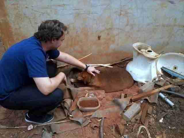 νας ευγενικός άνθρωπος από μια κοντινή πόλη που έμαθε την ιστορία του, ταξίδεψε μέχρι το βενζινάδικο και βρήκε τον σκύλο ανάμεσα σε σωρούς από σκουπίδια και μπάζα.