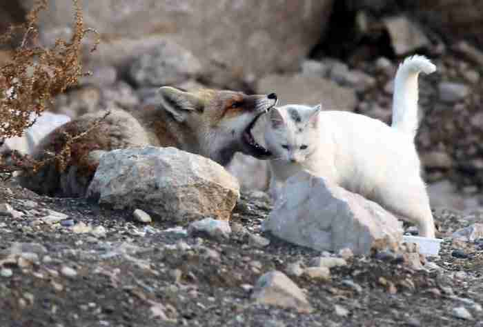 Έπειτα τα δυο ζώα κάθισαν παρέα για να ξεκουραστούν και να μοιραστούν ένα ψάρι.