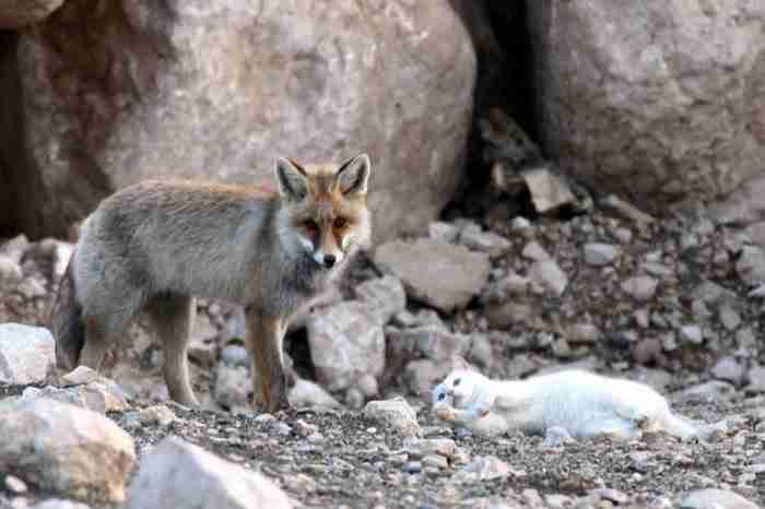 Αυτή η αλεπού και αυτή η γάτα αποδεικνύουν ότι δεν χρειάζεται να έχεις πολλά κοινά με κάποιον για να δεθείς μαζί του!