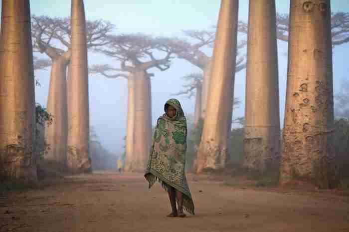 Ένα κορίτσι από τη Μαδαγασκάρη περπατάει ανάμεσα σε δέντρα Baobab.