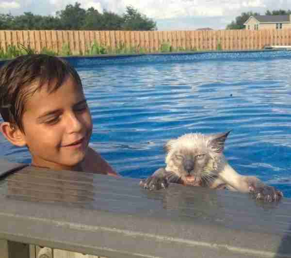 Αυτή η γάτα ούτε ξέρει κολύμπι αλλά ούτε και θέλει να μάθει..