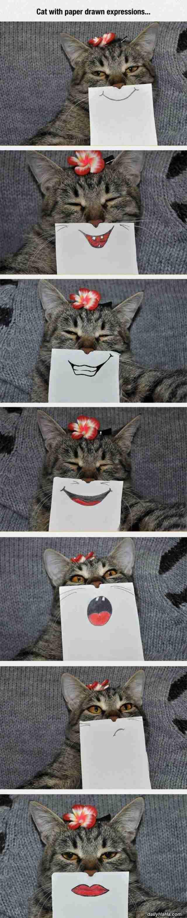 Αυτή είναι η γάτα με τα.. ωραιότερα χαμόγελα!!