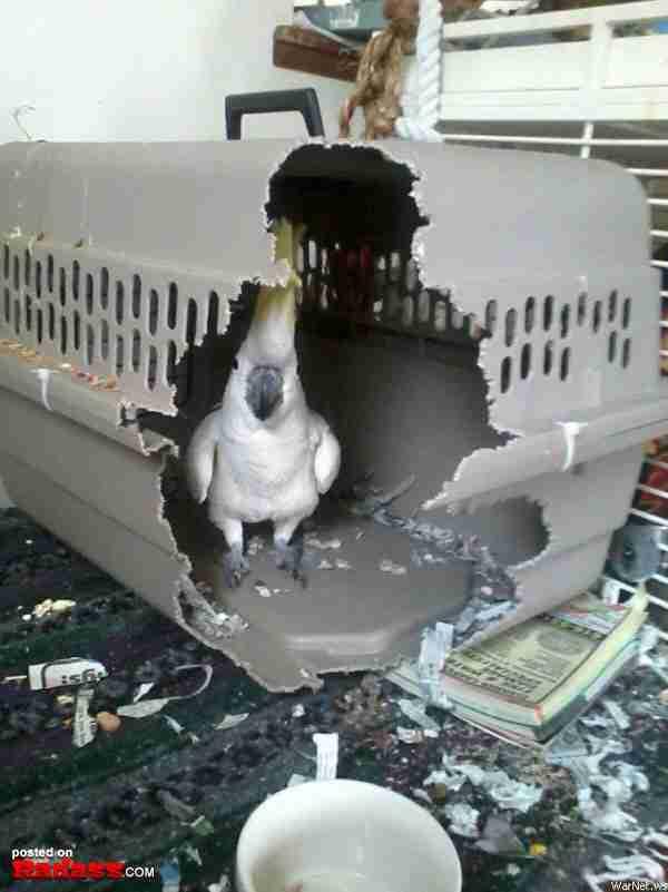 Κανένα κλουβί στον κόσμο δεν μπορεί να κρατήσει φυλακισμένο αυτό το πουλί..