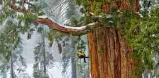 Αυτό το δέντρο είναι τόσο μεγάλο που δεν χωράει σε μια φωτογραφία!