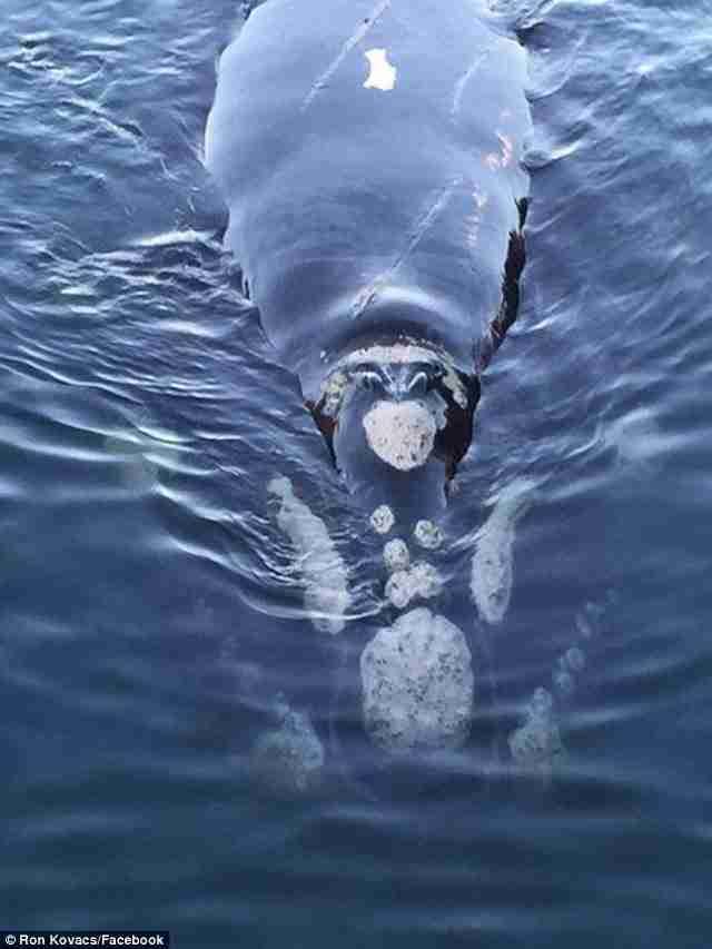Όταν τελικά τα κατάφεραν, η φάλαινα πλησίασε ξανά την βάρκα για να τους ευχαριστήσει για την καλοσύνη τους..