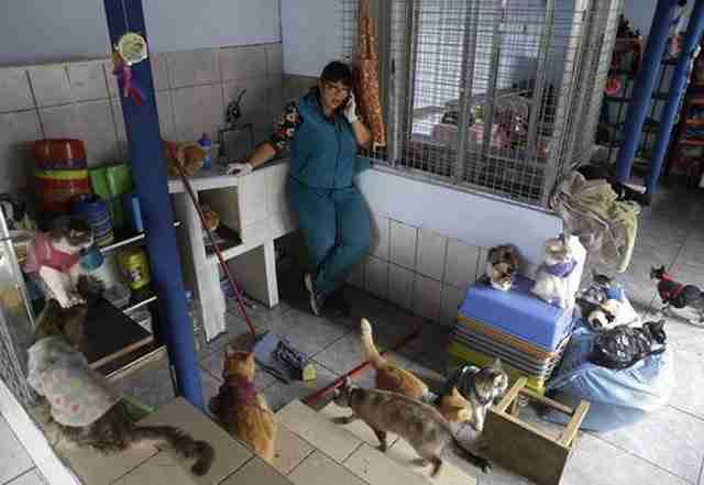 Η 45χρονη νοσοκόμα έχει μετατρέψει το διώροφο διαμέρισμα με τα οκτώ δωμάτια σε ένα νοσοκομείο για γάτες που πάσχουν από λευχαιμία.