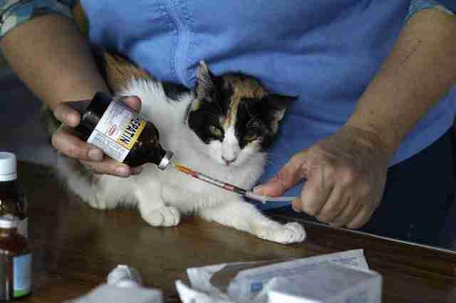 «Ο κόσμος δεν υιοθετεί ενήλικα γατιά, ειδικά αν πάσχουν από ανίατες ασθένειες», είπε η Περουβιανή νοσοκόμα.
