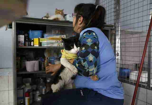 «Δεν είναι αυτός ο ρόλος μου, είμαι νοσοκόμα, έχω υποχρέωση απέναντι στις γάτες για τις οποίες δεν ενδιαφέρεται κανείς».