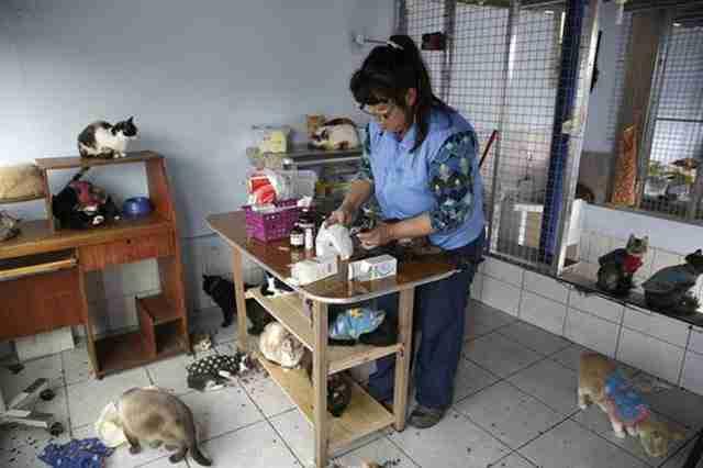 Η Τορέρο αγοράζει τροφή και φάρμακα για τις γάτες και τις φροντίζει για παράσιτα κάθε δύο μήνες.