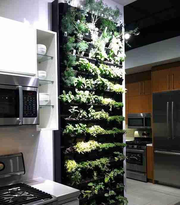 Ένα κήπο στην κουζίνα σας