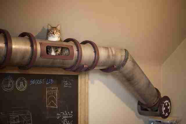 Διάδρομος για γάτες