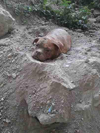 Αυτό που βρήκε θαμμένο στο χώμα παγώνει το αίμα. Ποιος θα μπορούσε να κάνει κάτι τέτοιο;