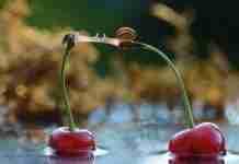 Φωτογραφίζει εκπληκτικά τα πιο μικρά πλάσματα της φύσης! Ποτέ τα έντομα δεν ήταν τόσο όμορφα!