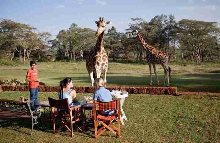 Μπορείτε επίσης να δειπνήσετε έξω και να απολαύσετε τα ζώα και την πανέμορφη θέα.