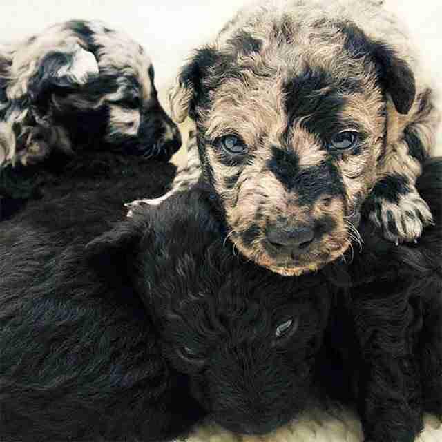 Αυτά τα σκυλιά ξεχωρίζουν από τα υπόλοιπα. Για τον πιο χαριτωμένο λόγο!!