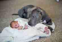 Ήθελε να διώξει το σκύλο γιατί πίστευε ότι θα κάνει κακό στη κόρη του. Διαβάστε όμως τι έγινε..