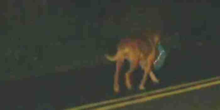 Η Λιλίκα περπατάει κάθε βράδυ κατά μήκος της εθνικής οδού για να πάει σε ένα μέρος που βρίσκεται πάνω από ένα μίλι μακριά.