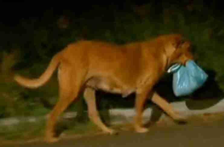 Η Ντε Σόουζα πίστεψε ότι η σκυλίτσα θα είχε κάπου τα μικρά της και πήγαινε το φαγητό που της έδινε σε αυτά για να τα ταίσει.
