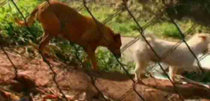 Και όταν φτάνει στο σπίτι της δεν προσφέρει το φαγητό της μόνο στα μικρά της αλλά και στα υπόλοιπα αδέσποτα ζώα που ζουν στην παραγκούπολη.