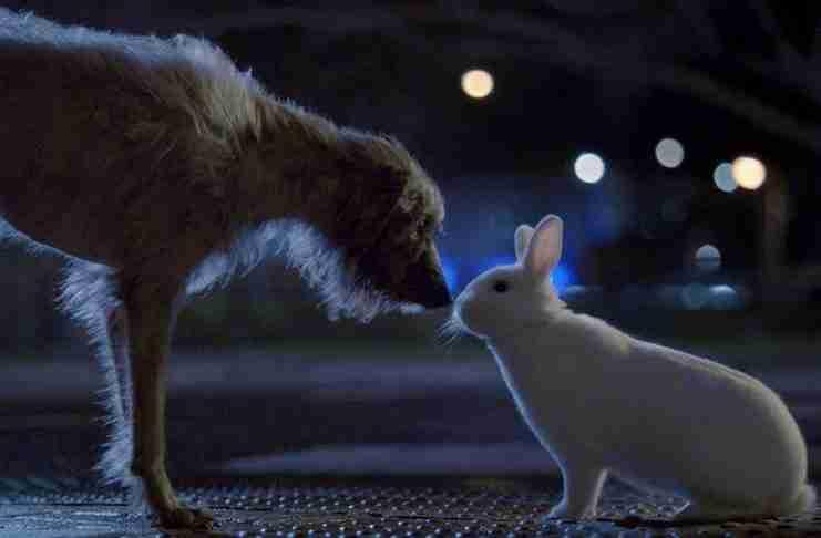 Ένας γενναίος σκύλος ξεφεύγει από τον βίαιο ιδιοκτήτη του για να βρει λίγη αγάπη..