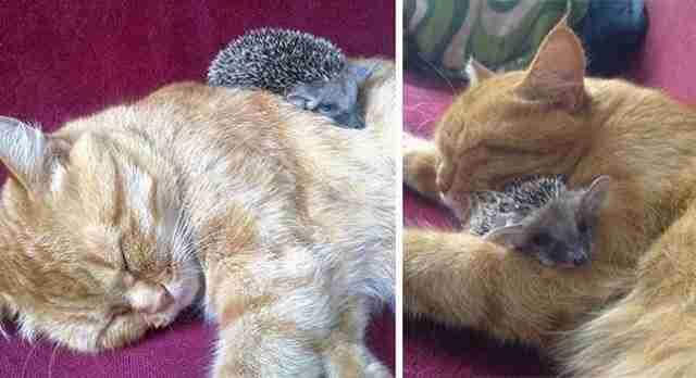 30 αταίριαστα φιλαράκια ζώα που λατρεύουν να κοιμούνται μαζί!