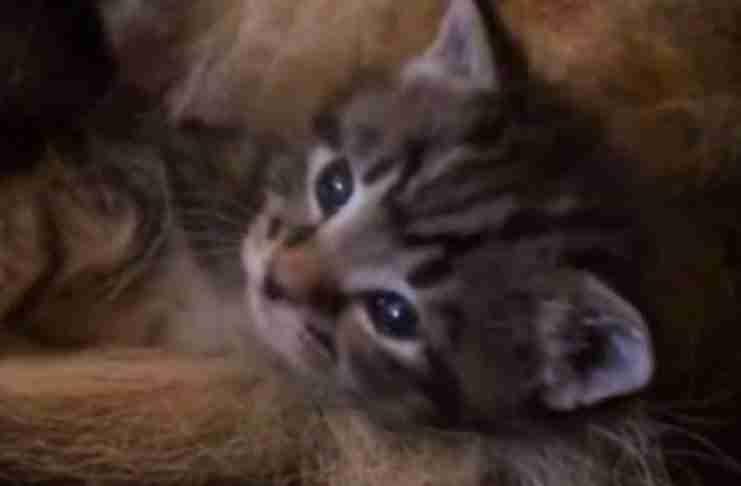 Ποτέ δεν θα μπορέσετε να μαντέψετε πού κοιμάται αυτό το ορφανό γατάκι..