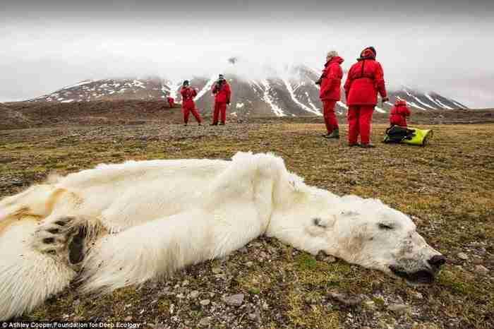 Αυτή η πολική αρκούδα πέθανε από την πείνα στο Svalvard της Νορβηγίας.