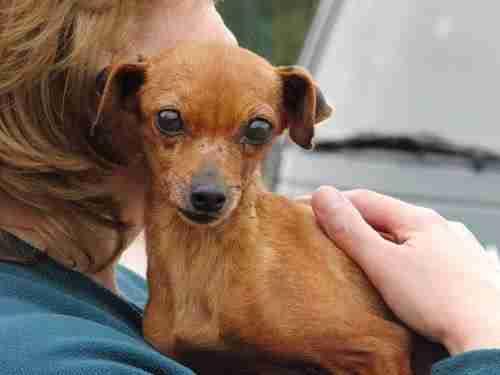 Αυτή η σκυλίτσα έζησε 12 χρόνια κλεισμένη σε ένα κλουβί και σήμερα παλεύει για τη ζωή της