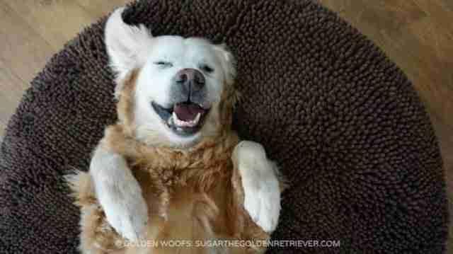Ένας σκύλος πήγαινε κάθε απόγευμα στο σπίτι της για να κοιμηθεί.. για τον πιο ξεκαρδιστικό λόγο!