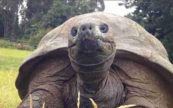 Η φωτογραφία στα αριστερά είναι από το 1902. Η φωτογραφία δεξιά από το 2015. Και είναι η ίδια χελώνα!