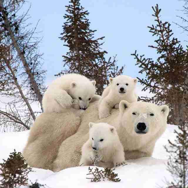 30 αξιολάτρευτες φωτογραφίες με οικογένειες ζώων
